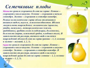 Семечковые плоды Яблоки по срокам созревания делят на сорта: Летние – созрева