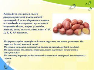 Вегетативная группа овощей Клубнеплоды Картофель является самой распростране