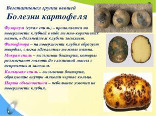 Вегетативная группа овощей Болезни картофеля Фузариум (сухая гниль) – проявля