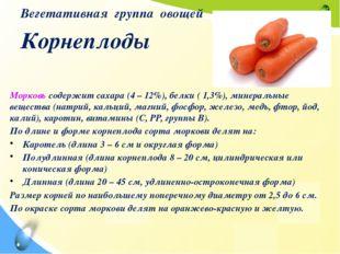 Вегетативная группа овощей Корнеплоды Морковь содержит сахара (4 – 12%), белк