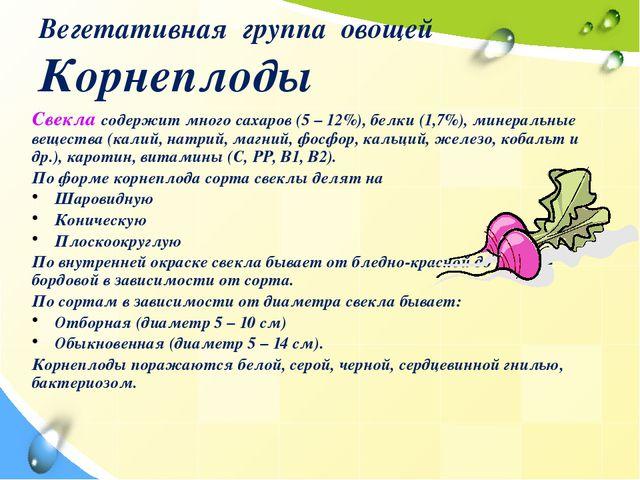 Вегетативная группа овощей Корнеплоды Свекла содержит много сахаров (5 – 12%)...