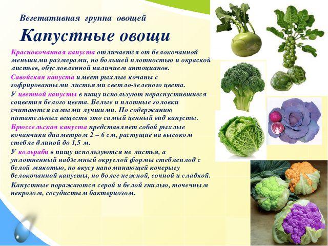 Вегетативная группа овощей Капустные овощи Краснокочанная капуста отличается...