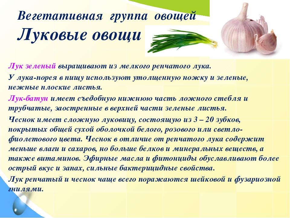 Вегетативная группа овощей Луковые овощи Лук зеленый выращивают из мелкого ре...