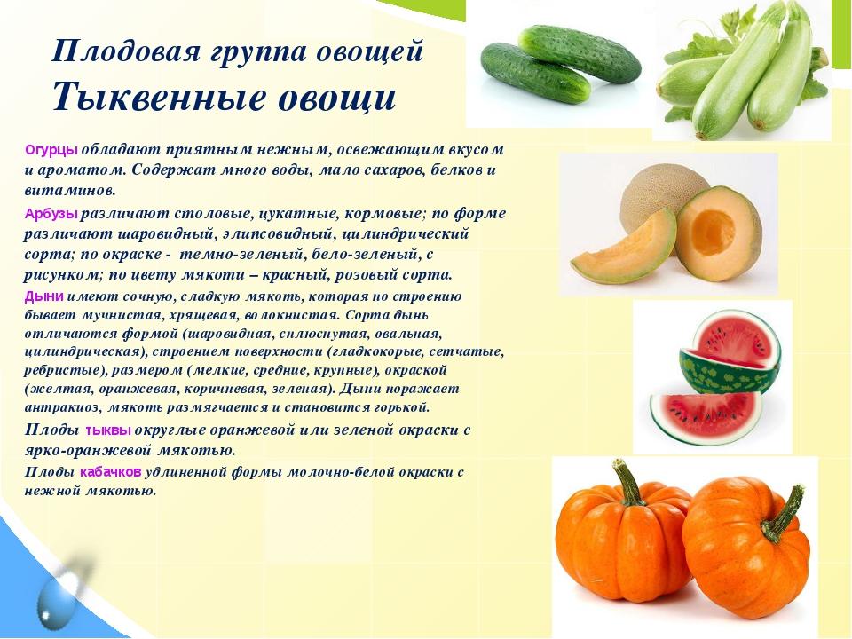 Плодовая группа овощей Тыквенные овощи Огурцы обладают приятным нежным, освеж...