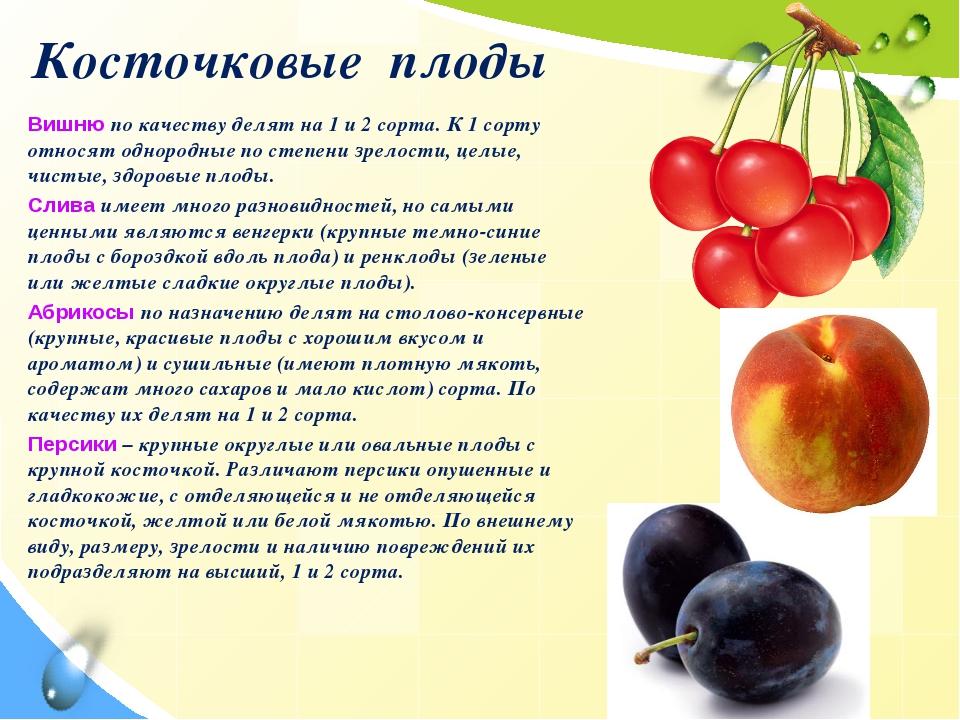 Косточковые плоды Вишню по качеству делят на 1 и 2 сорта. К 1 сорту относят о...