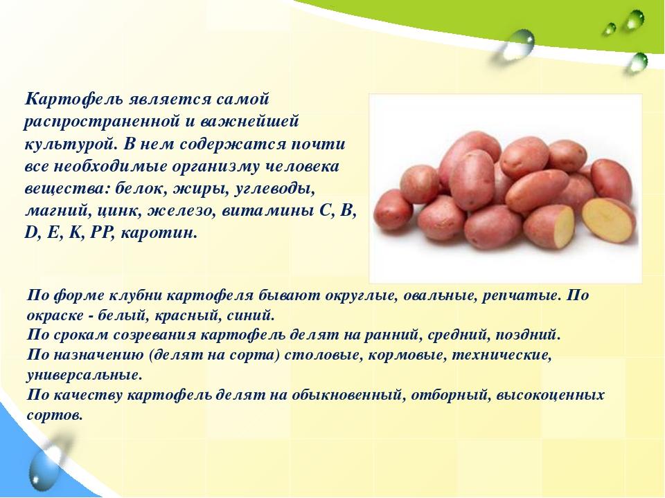 Вегетативная группа овощей Клубнеплоды Картофель является самой распростране...