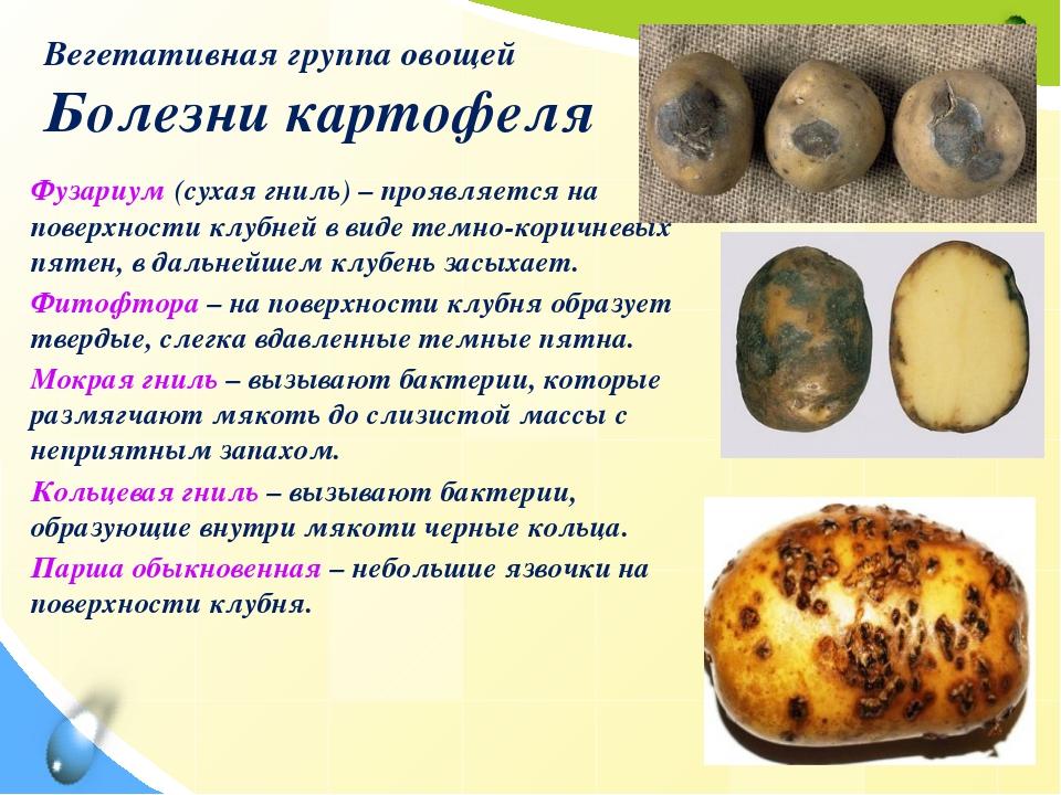 Вегетативная группа овощей Болезни картофеля Фузариум (сухая гниль) – проявля...