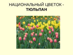НАЦИОНАЛЬНЫЙ ЦВЕТОК - ТЮЛЬПАН