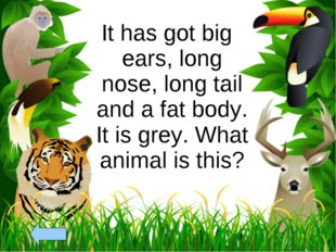 It has got big ears, long nose, long tail and a fat body. It is grey. What an