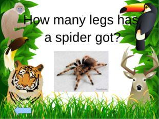 How many legs has a spider got?