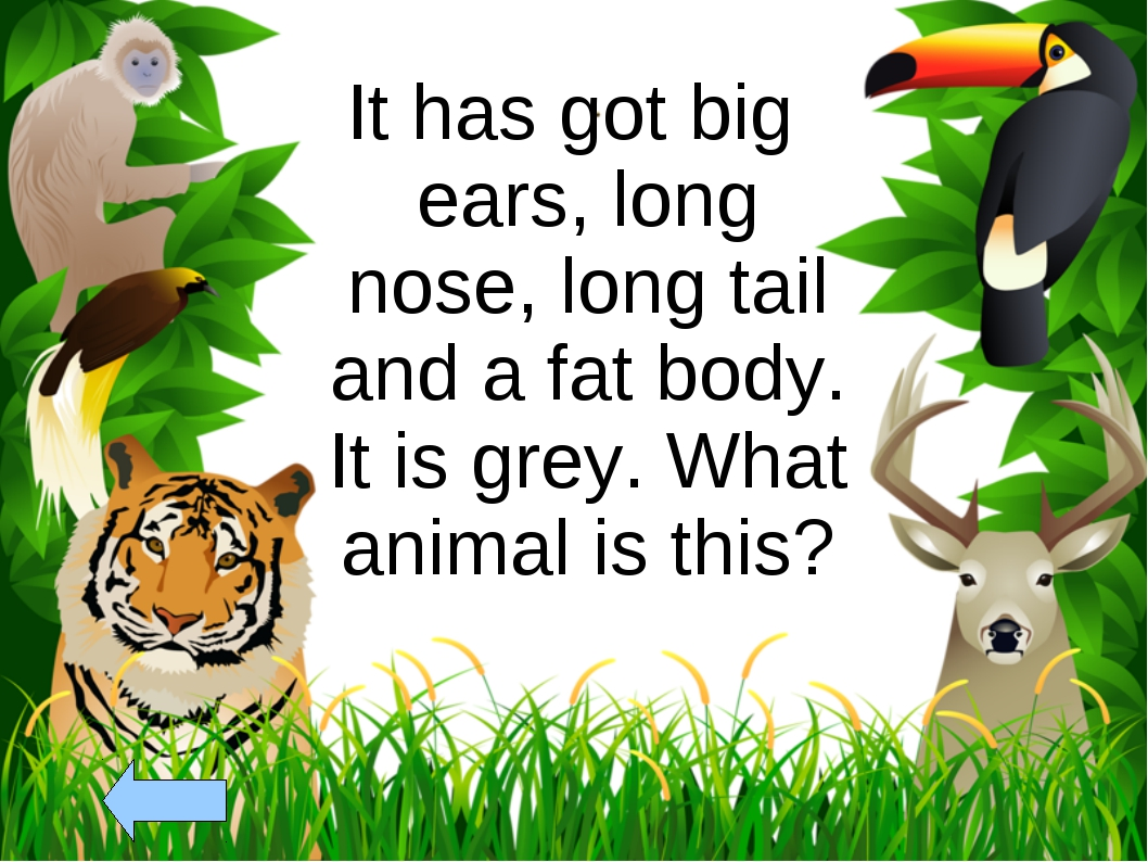 It has got big ears, long nose, long tail and a fat body. It is grey. What an...
