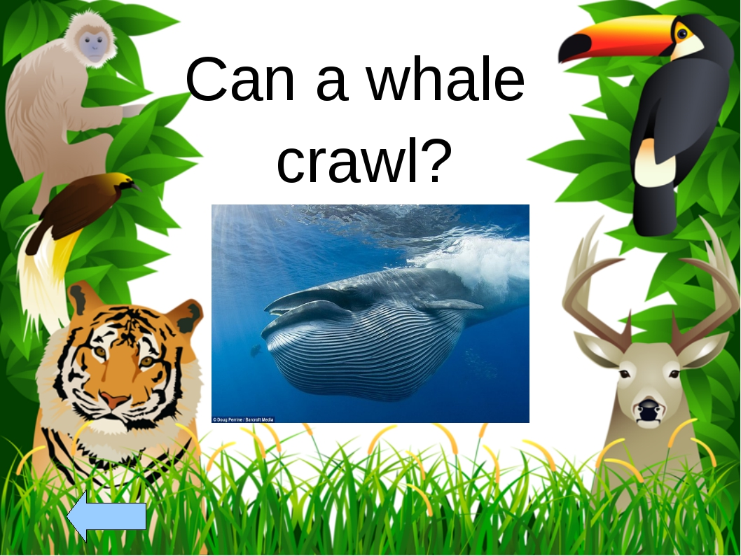 Can a whale crawl?