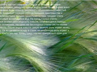 Растительность состоит главным образом из злаков, растущих маленькими кочками