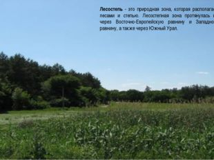 Лесостепь - это природная зона, которая располагается между лесами и степью.