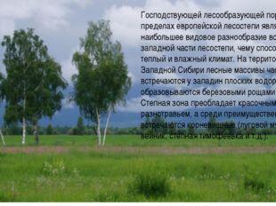 Господствующей лесообразующей породой в пределах европейской лесостепи являет