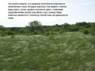 Что касается фауны, то в пределах лесостепи не встречаются свойственных тольк