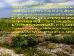 Степи — это зональный тип ландшафта умеренного климатического пояса и субтроп