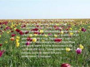 Плодородные почвы степей и благоприятные условия жизни способствовали густому