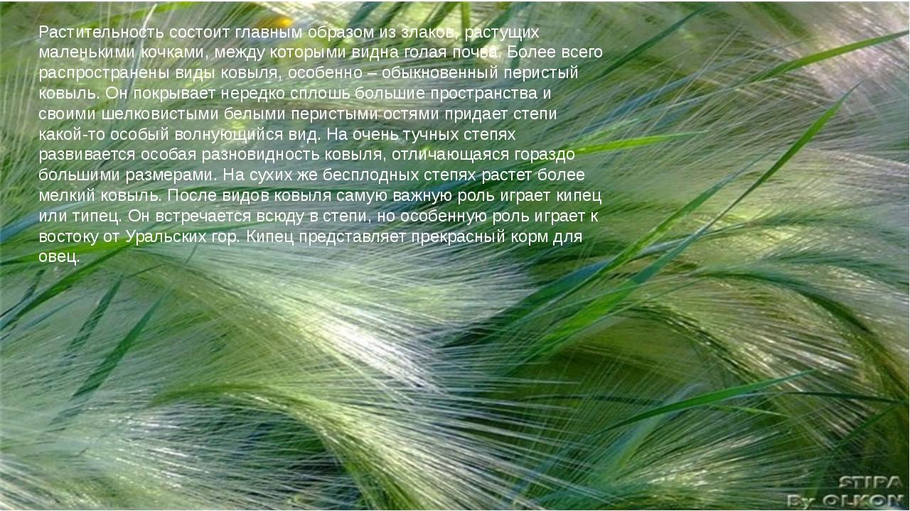 Растительность состоит главным образом из злаков, растущих маленькими кочками...