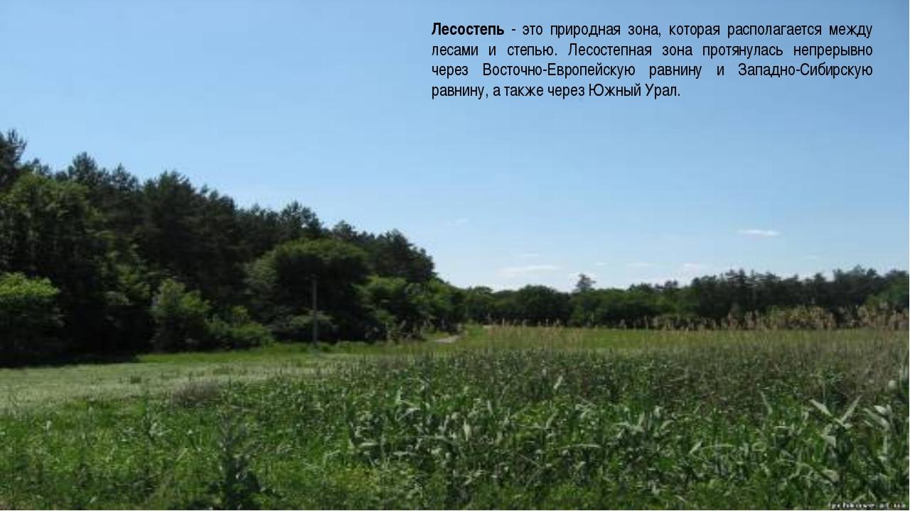 Лесостепь - это природная зона, которая располагается между лесами и степью....