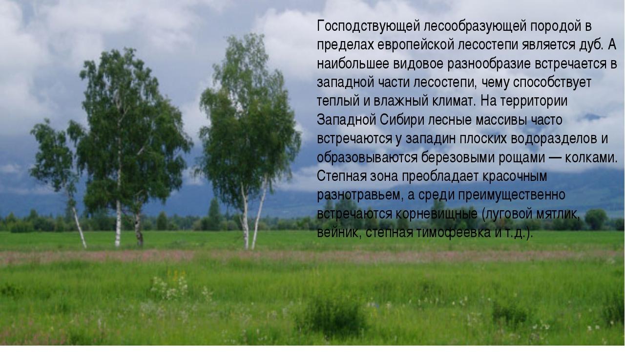 Господствующей лесообразующей породой в пределах европейской лесостепи являет...