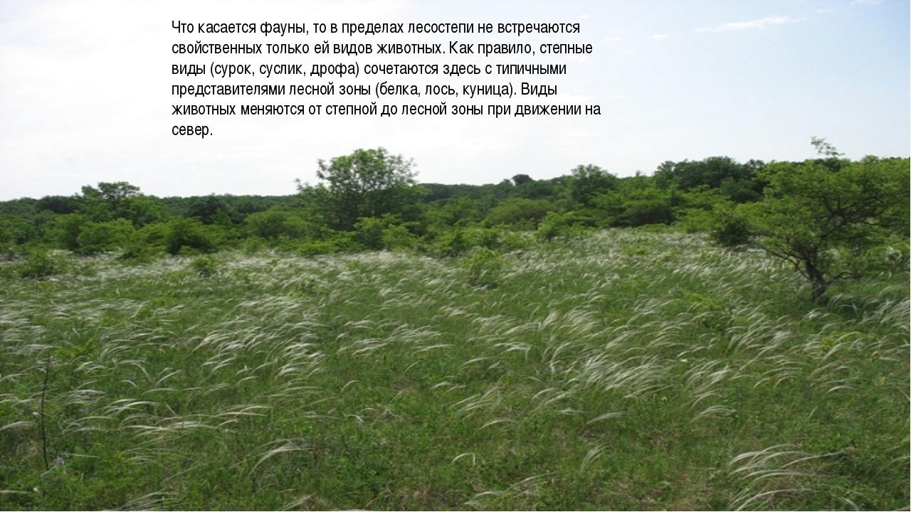 Что касается фауны, то в пределах лесостепи не встречаются свойственных тольк...