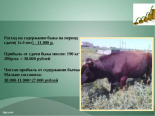 Расход на содержание быка на период сдачи( 1г.4 мес) - 11.000 р. Прибыль о