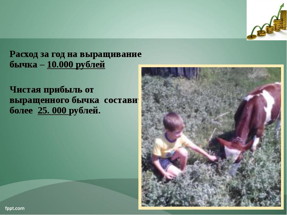 Расход за год на выращивание бычка – 10.000 рублей Чистая прибыль от выращенн...
