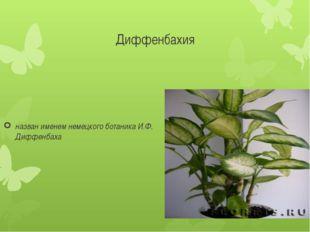 Диффенбахия назван именем немецкого ботаника И.Ф. Диффенбаха