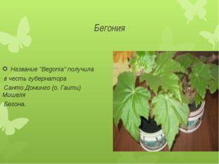 """Бегония Название """"Begonia"""" получила в честь губернатора Санто Доминго (о. Гаи"""