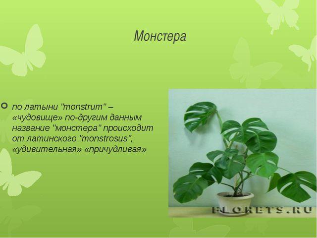 """Монстера по латыни """"monstrum"""" – «чудовище» по-другим данным название """"монстер..."""