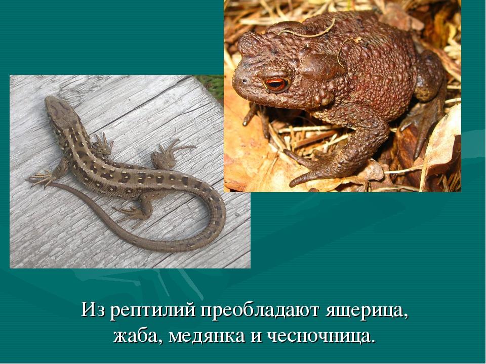 Из рептилий преобладают ящерица, жаба, медянка и чесночница.