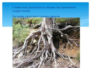 Совместная деятельность множества организмов создает почву. Растения укрепляю