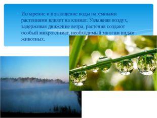 Испарение и поглощение воды наземными растениями влияет на климат. Увлажняя в