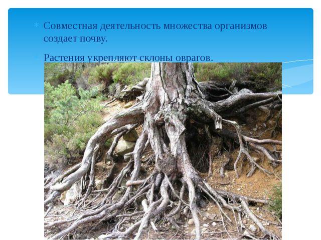 Совместная деятельность множества организмов создает почву. Растения укрепляю...
