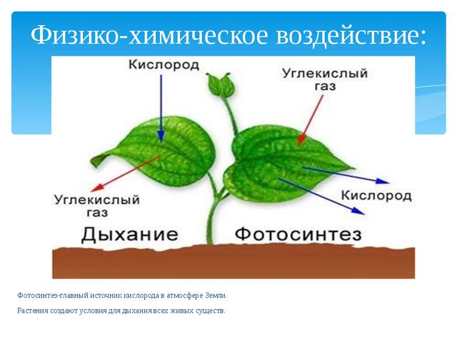 Физико-химическое воздействие: Фотосинтез-главный источник кислорода в атмосф...