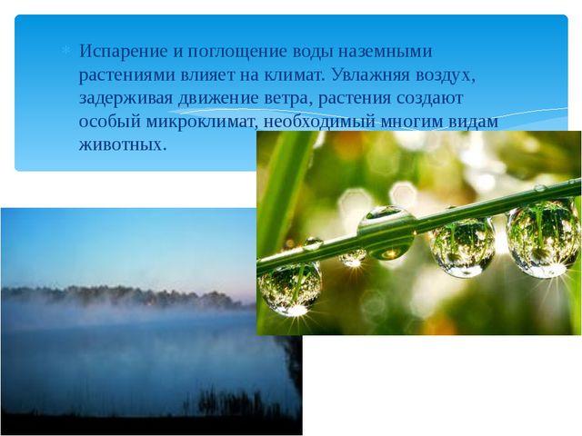 Испарение и поглощение воды наземными растениями влияет на климат. Увлажняя в...
