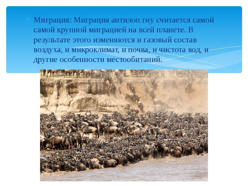 Миграция: Миграция антилоп гну считается самой самой крупной миграцией на все...