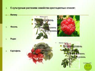 К культурным растениям семейства крестоцветных относят: Малину Фасоль Редис К