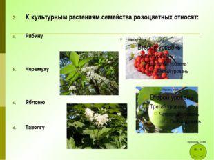 К культурным растениям семейства розоцветных относят: Рябину Черемуху Яблоню