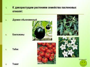 К дикорастущим растениям семейства пасленовых относят: Дурман обыкновенный Ба