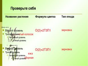 Проверьте себя Название растения Формула цветка Тип плода душистый колосок О(