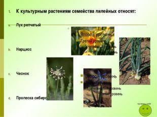 К культурным растениям семейства лилейных относят: Лук репчатый Нарцисс Чесно