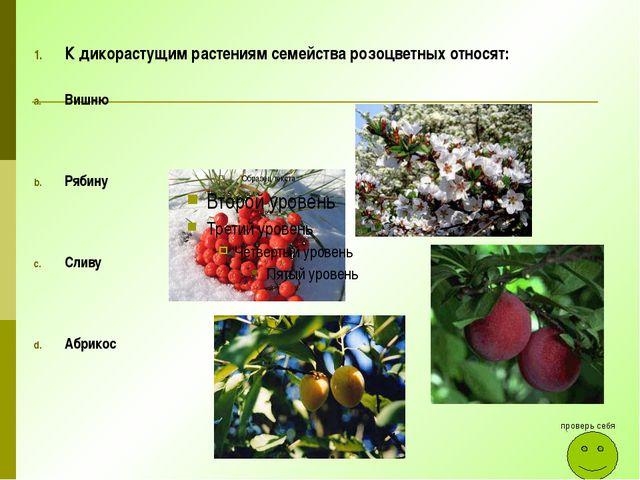 К дикорастущим растениям семейства розоцветных относят: Вишню Рябину Сливу Аб...