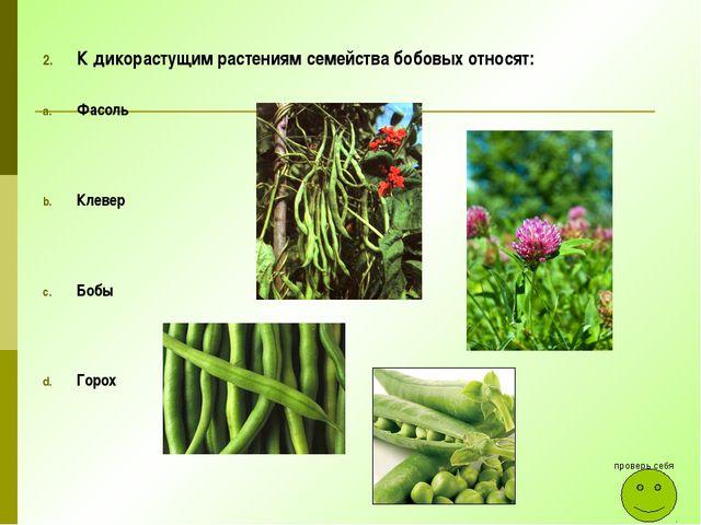 К дикорастущим растениям семейства бобовых относят: Фасоль Клевер Бобы Горох...