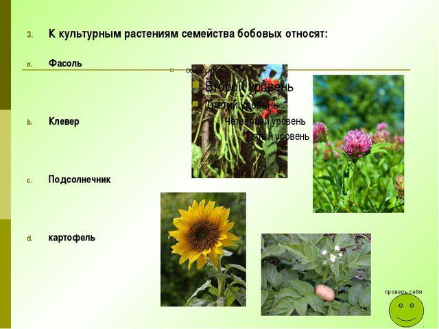 К культурным растениям семейства бобовых относят: Фасоль Клевер Подсолнечник...