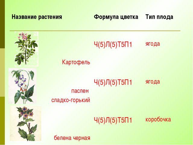 Название растения Формула цветка Тип плода Картофель Ч(5)Л(5)Т5П1 ягода пасле...