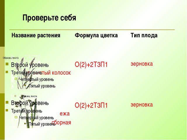 Проверьте себя Название растения Формула цветка Тип плода душистый колосок О(...