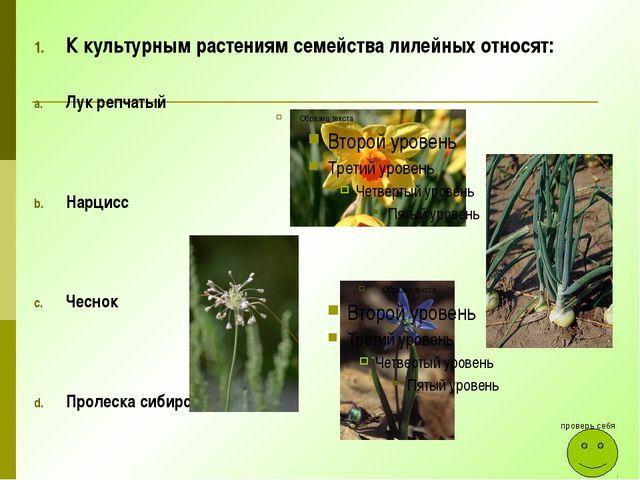 К культурным растениям семейства лилейных относят: Лук репчатый Нарцисс Чесно...