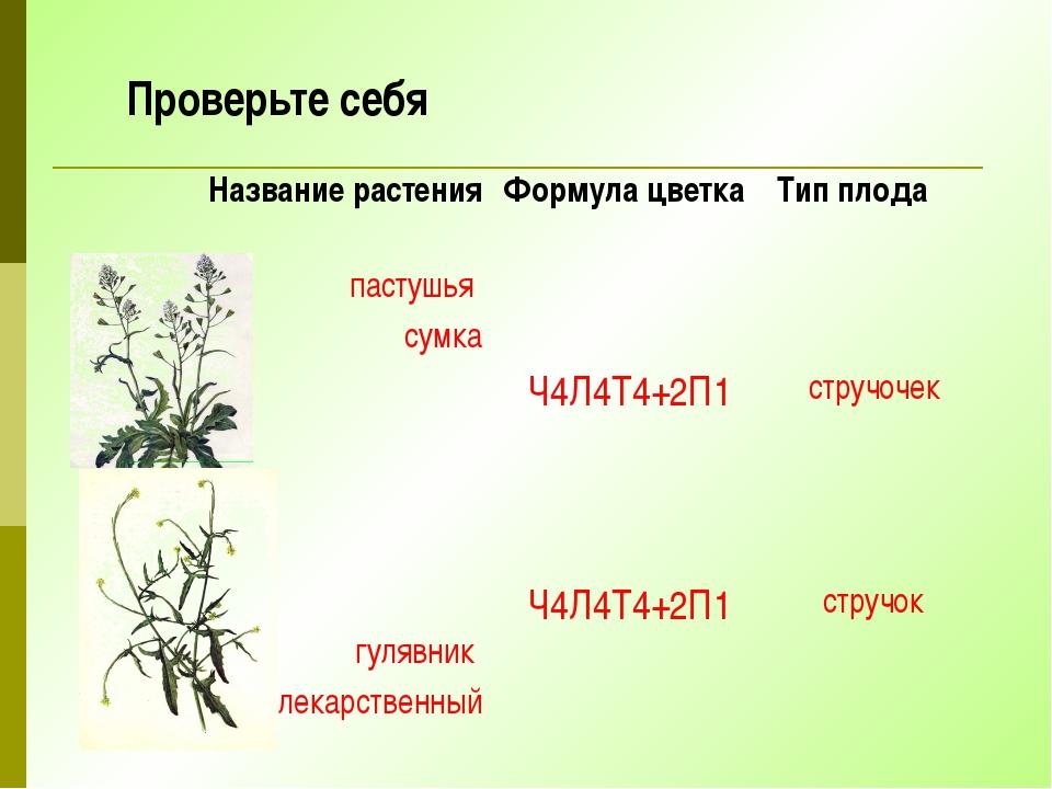 Проверьте себя Название растения Формула цветка Тип плода пастушья сумка Ч4Л4...